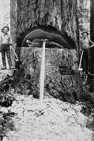 Loggers from the 1800s